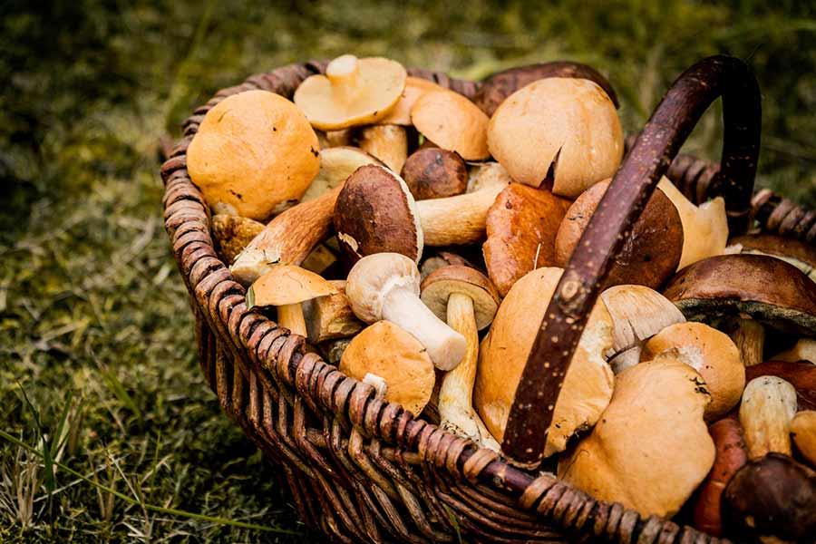 alimentos para el otoño