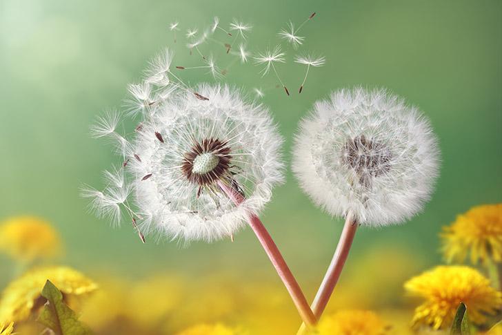 Remedios para la alergia durante la primavera