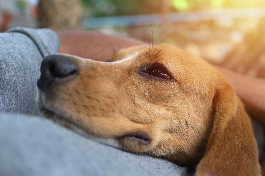perros de compañía personas mayores